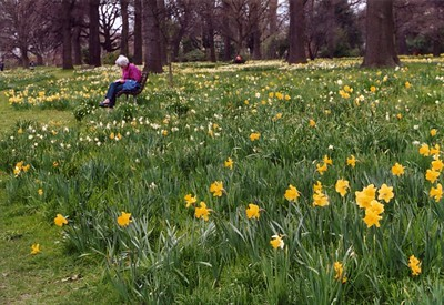 Christchurch is well known for its fields of daffodils. This photograph was taken by Stephen Fong with a Sigma SA-300N.