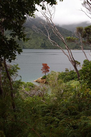 A view from the Queen Charlotte track