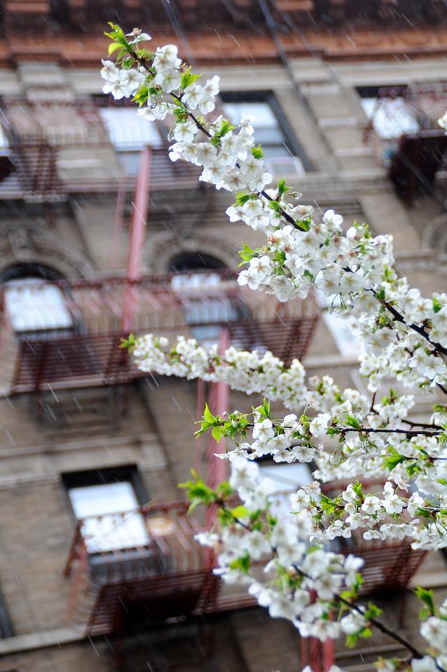 NYC_apr09_041