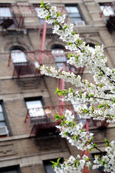 NYC_apr09_042