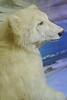Norway 2015 - Tromso - Polar Museum Visit 104
