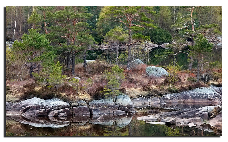 Blooming trees and reflections in a small lake near Preikestolen.