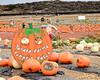 Tanka Farms: Pumpkinmania