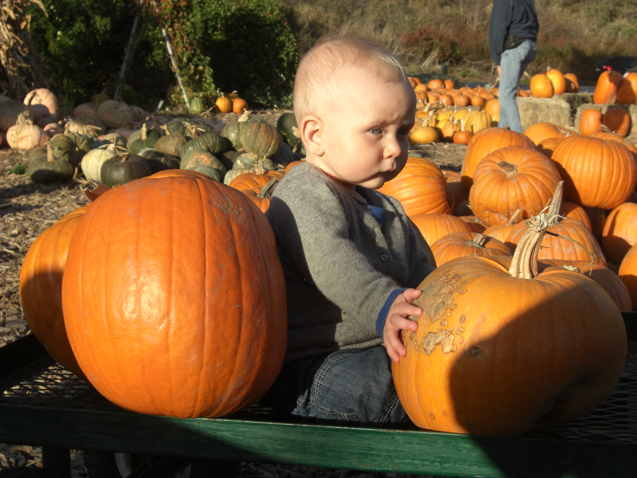 My first pumpkin patch