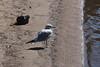 Gull on Dwight Beach