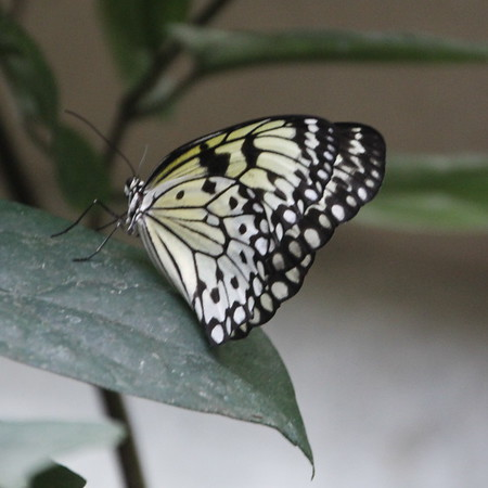 Niagara Butterfly Conservatory<br /> 18 September 2015