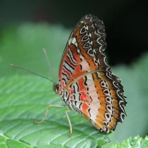 Niagara Butterfly Conservatory - 18 September 2015