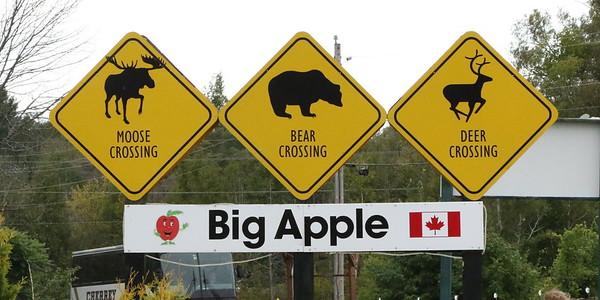 The Big Apple, Colborne ON 13 September 2019