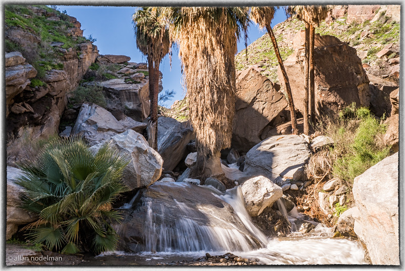 Falls at Palm Canyon