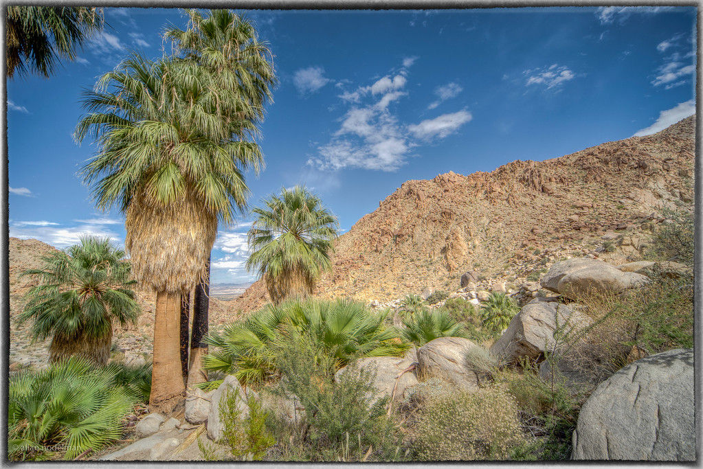 Palm Oasis in Joshua Tree National Park