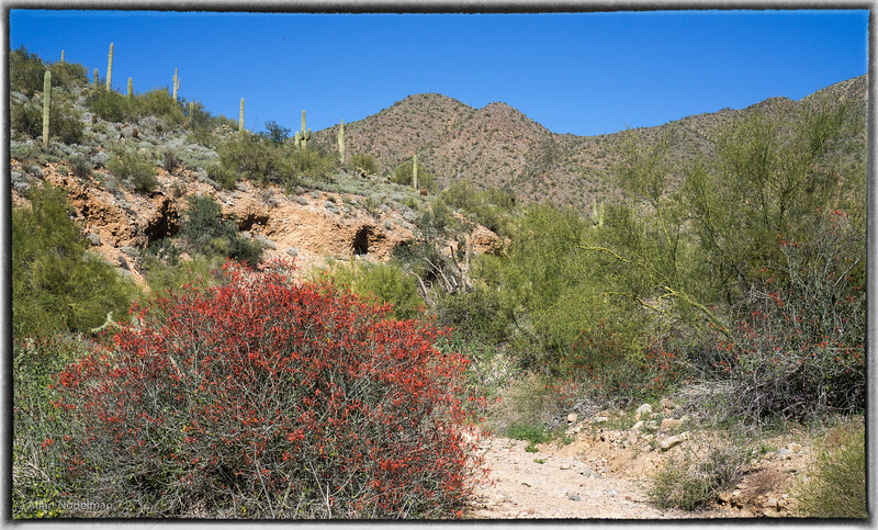 Old Jeep Trail, McDowell Preserve Scottsdale