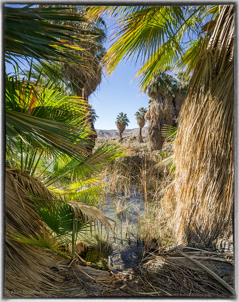1000 Palms Oasis