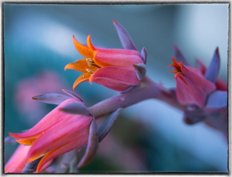 Palm Spring Flower