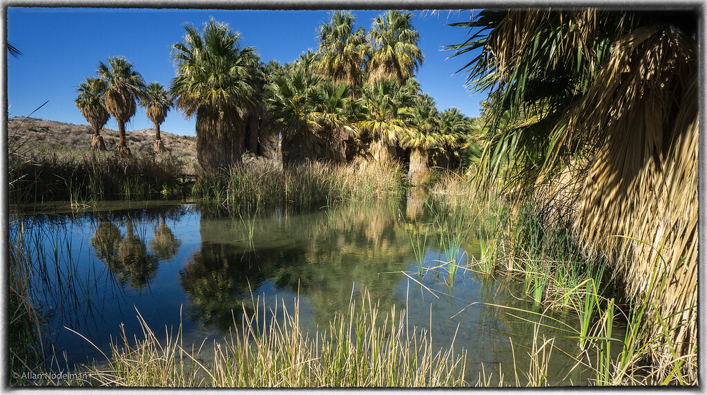 1000 Palms Oasis Preserve
