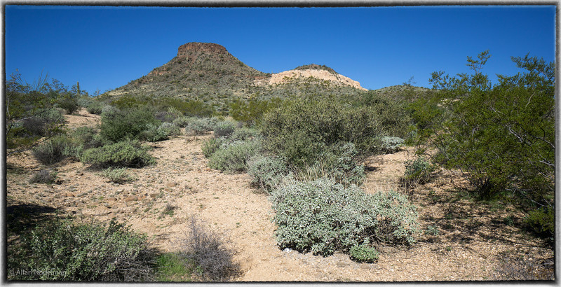 Brown's Mountain Trail, McDowell Sonoran Preserve  (February 10, 2015)