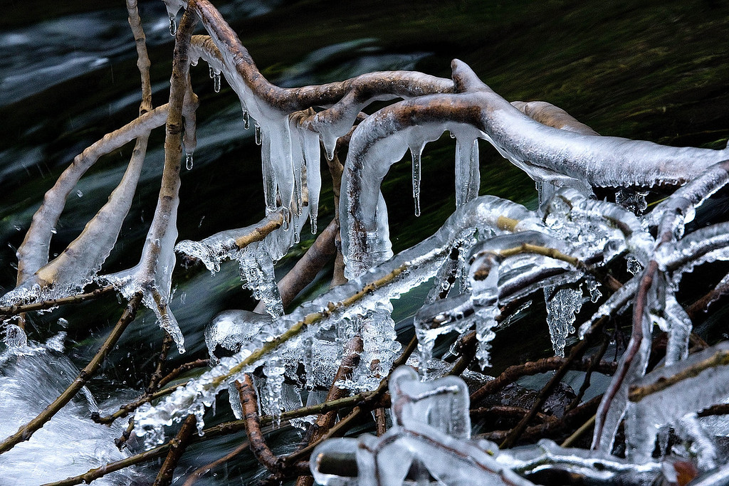frozen tree branch - this was hanging over the river and just shows how cold it was all day.