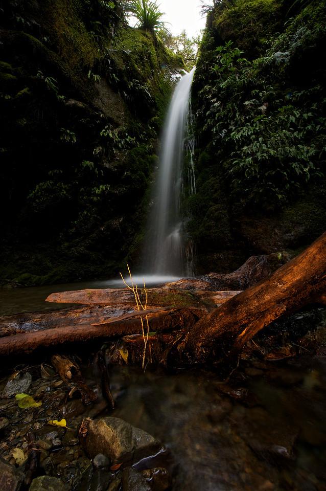 PeelForest_2011-10-15_14-44-11__DSC3277_©RichardLaing(2011)