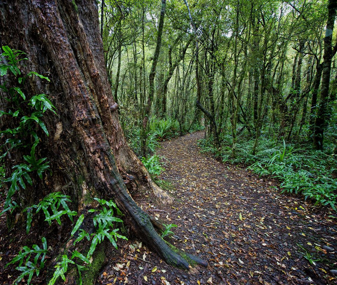 PeelForest_2011-10-14_14-44-44__DSC3034_©RichardLaing(2011)