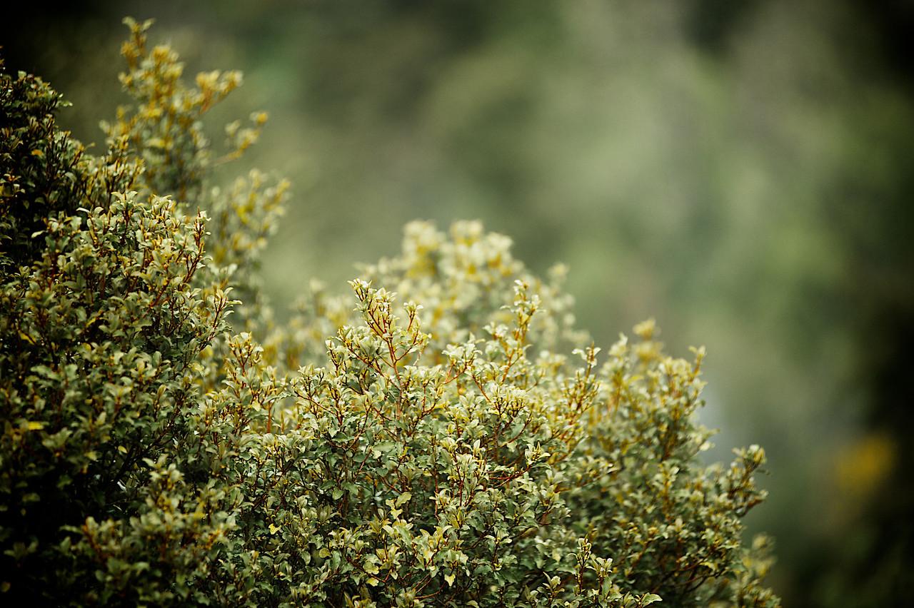 PeelForest_2011-10-15_08-07-07__DSC3090_©RichardLaing(2011)