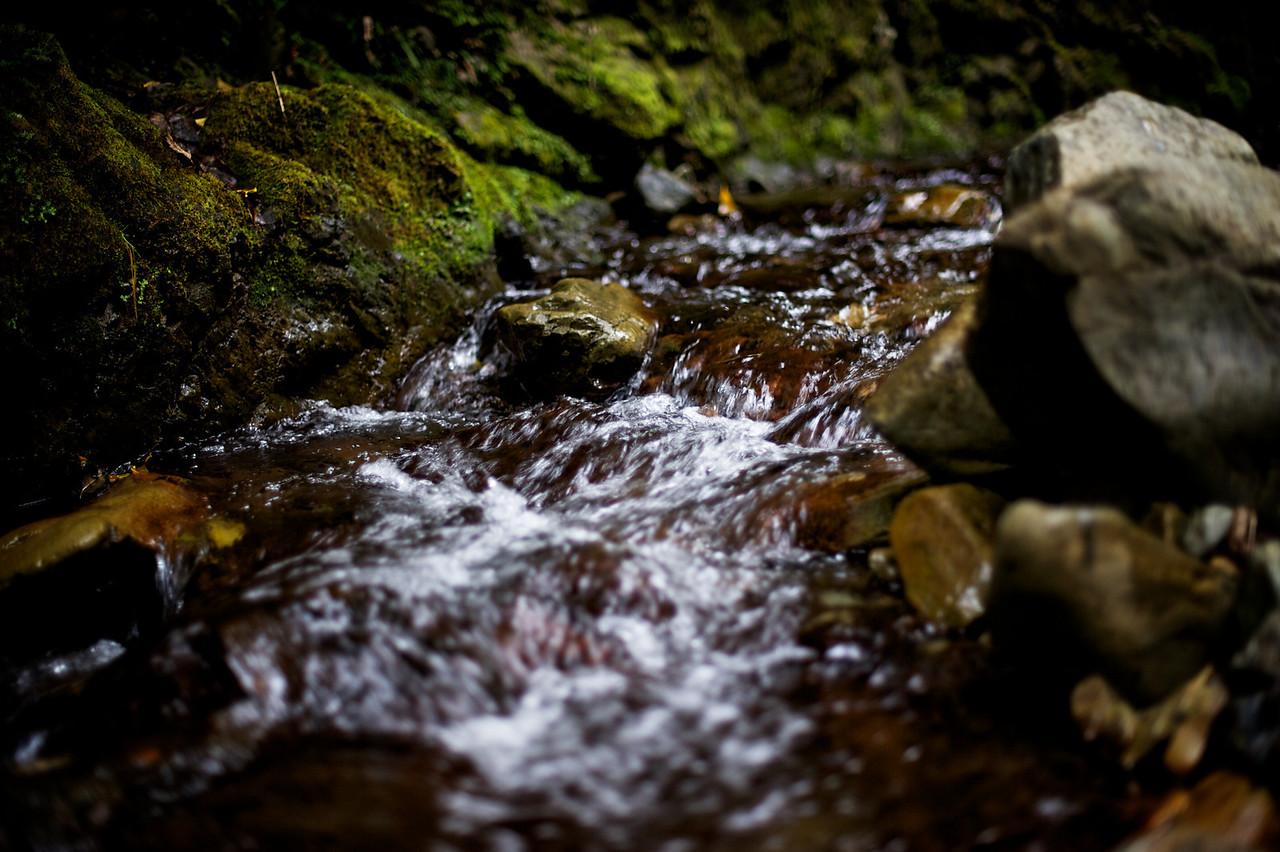PeelForest_2011-10-15_15-10-14__DSC3306_©RichardLaing(2011)