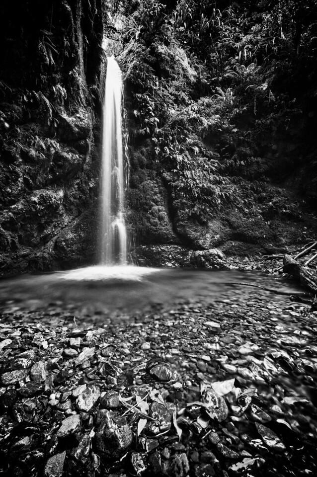 PeelForest_2011-10-15_14-39-24__DSC3267_©RichardLaing(2011)_HDR