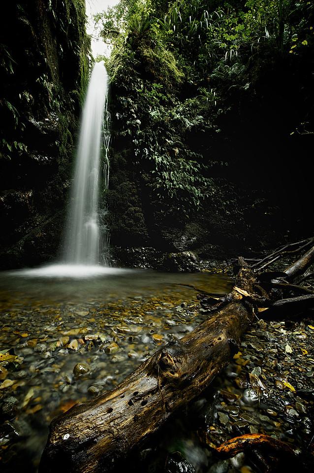 PeelForest_2011-10-15_14-40-22__DSC3270_©RichardLaing(2011)