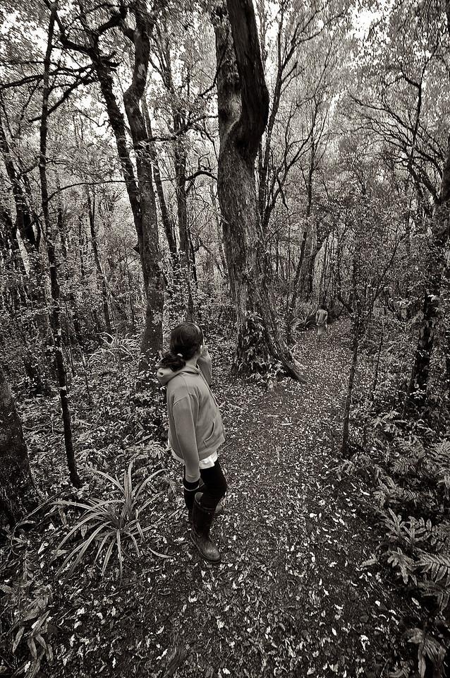PeelForest_2011-10-14_14-43-56__DSC3027_©RichardLaing(2011)