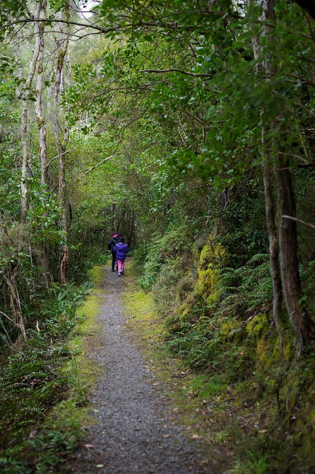 PeelForest_2011-10-15_13-48-23__DSC3225_©RichardLaing(2011)