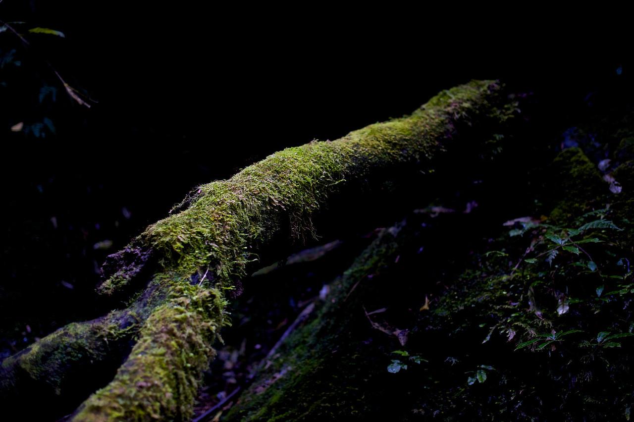 PeelForest_2011-10-15_14-48-35__DSC3293_©RichardLaing(2011)