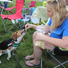 4th of July celebration at Pelham Elementary School. Dani Paquette of Pelham feeds popcorn to Ollie, a 9-month-old beagle owned by Katie Ferullo. (SUN/Julia Malakie)