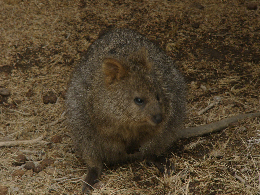 20060423_1931