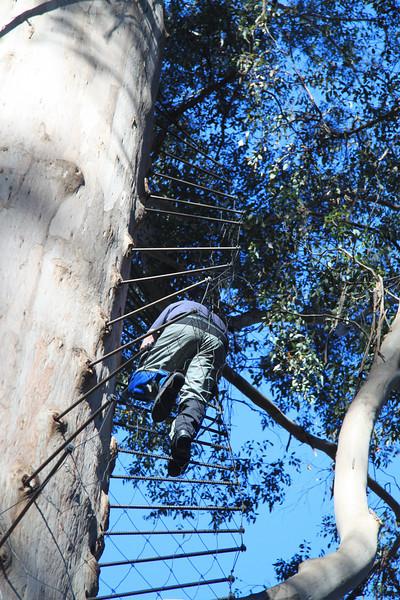 Gloucester Tree Western Australia