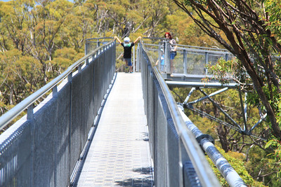 Tree top walk Western Australia