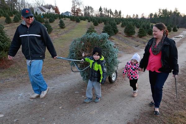 Picking trees at Pierce's Christmas Tree Farm