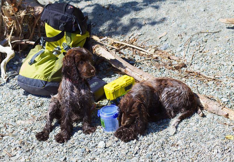Two Puppies chilling Lake Wanaka Waterfront after longish walk up Mt Iron