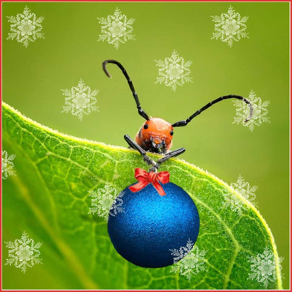 Red Bug Decorates for Christmas