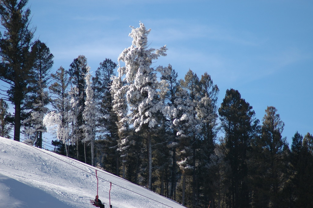 Strange effect of wind driven snow covering a tree.