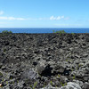 This is the most recent lava flow that reached the sea from 2010. <br /> The first shrubs and plants are just starting to re-colonize the rocks.
