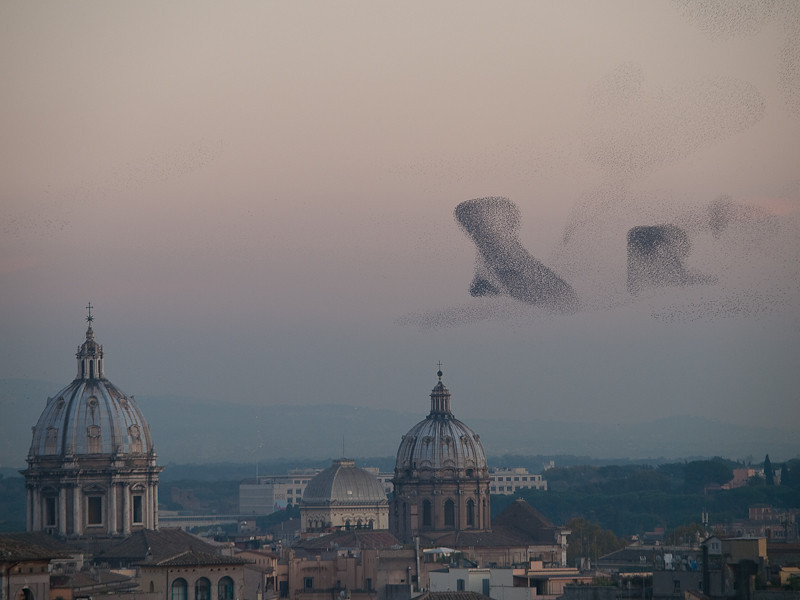 Starlings flocking over Rome