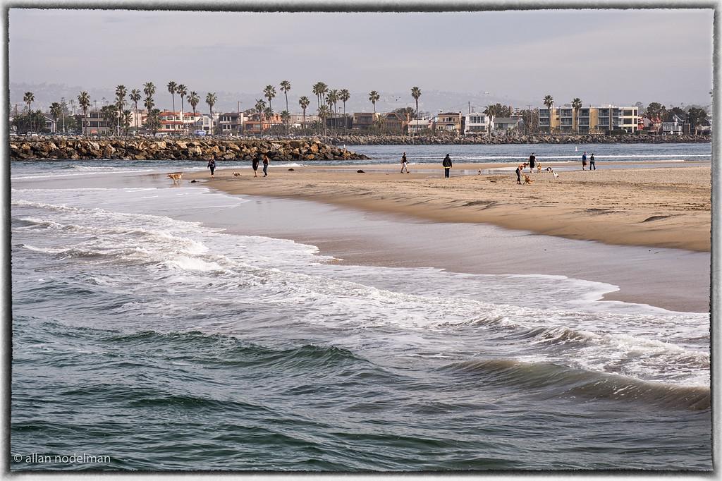 Dog Park Ocean Beach