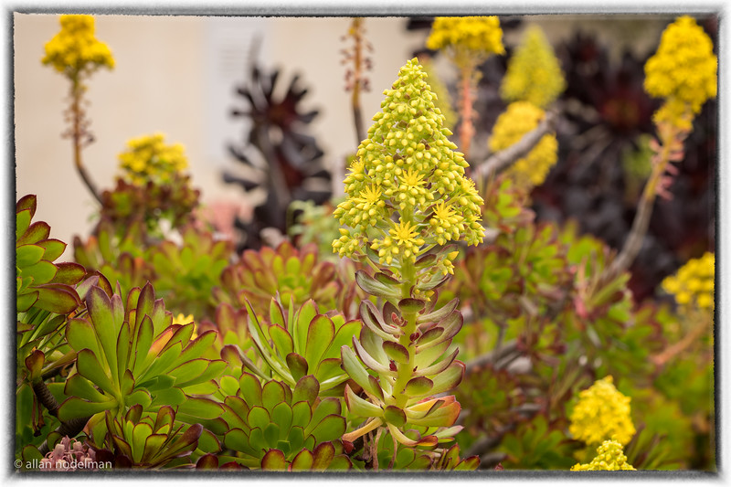 From Neighbourhood Gardens in Ocean Beach
