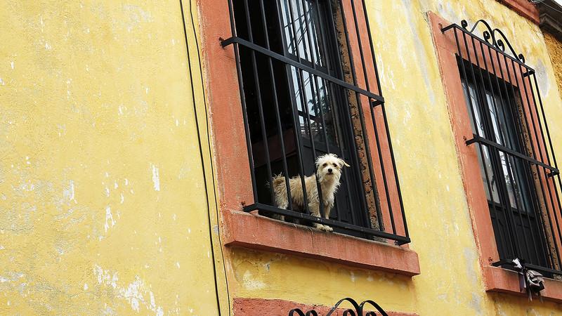 301 San Miguel de Allende