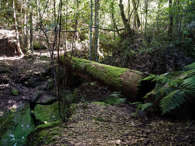 Rainforest beside Quilty's Mtn.