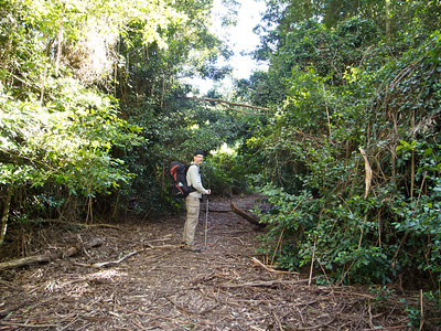 "Entering ""The Vines"", a remnant rainforest area ."