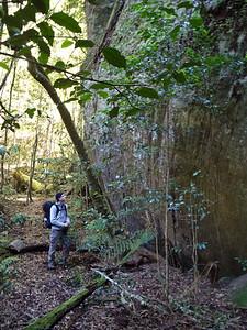 Rainforest area beside Quilty's Mtn.