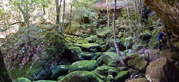 Another mossy glen beside Quilty's Mtn. A great place to stop for lunch.