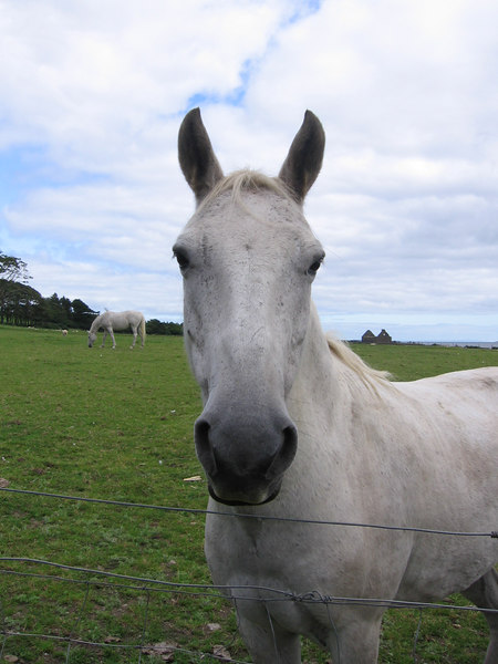 A friendly horse at Skipness.