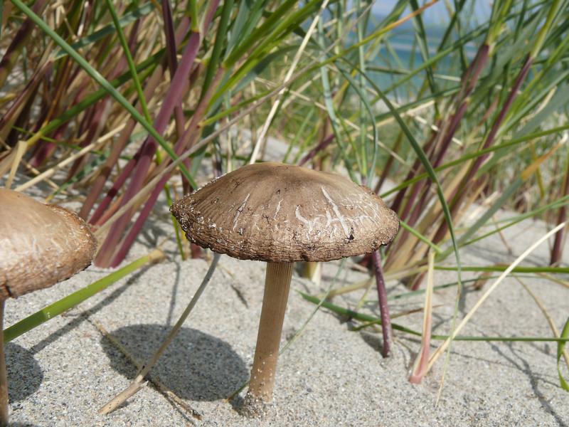 Mushroom on the beach.