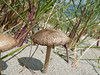 Mushroom on the beach.