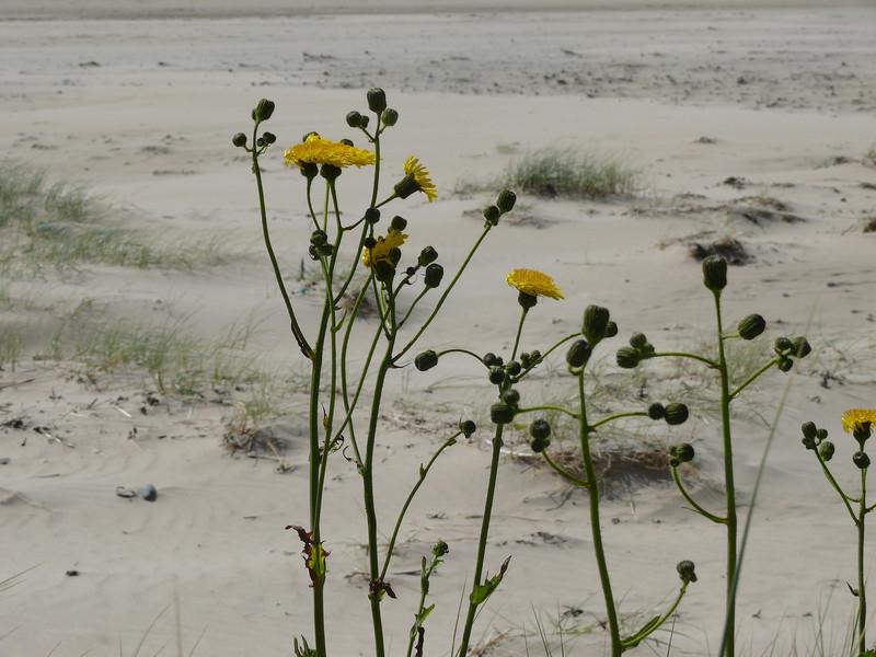 Kilchoman beach.